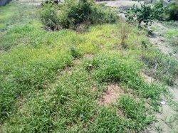 Vente terrain - Brazzaville
