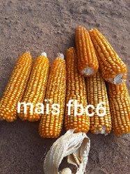Production et commercialisation Semences variétés améliorées