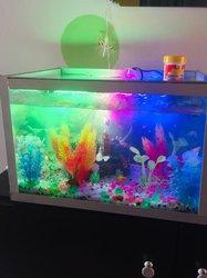 Aquariums électriques - 7 poissons - escargot marin