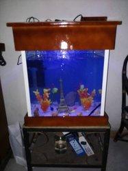 Aquarium complet +poissons tigre