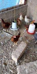 Formation en élevage