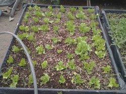 Micro jardin