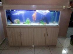 Aquariums grand