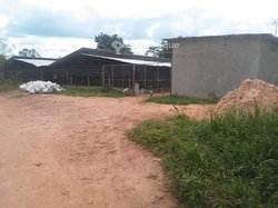 Vente ferme avicole 3600 m² - Yamoussoukro