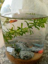 Aquarium décoratif