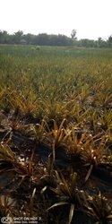 Vente Terrain 10 hectares - Parakou