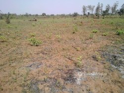 Vente terrain 10 ha- Parakou