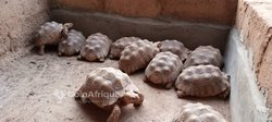 Tortues géantes