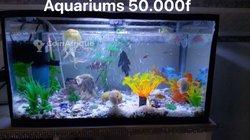 Petits Aquariums