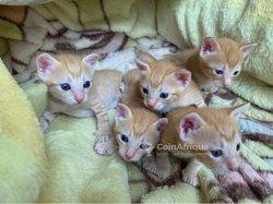 Kittens / chatons