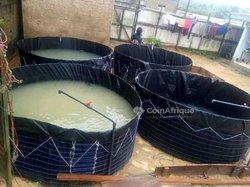 Bacs pisciculture