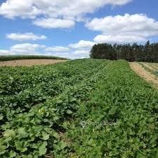 Terrain agricole  - Tamba
