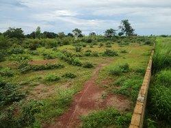 Terrain agricole 2 hectares et demi - Baguineda