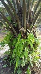 Vente Verger 104 ha - Héhé Bonoua