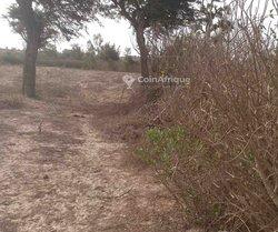 Terrain agricole 4245 m²   -Darou alpha - Tivaouane