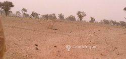Vente terrain agricole 10 ha - Keur Mbaye Sine