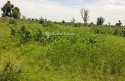 Terrain agricole  4105 m²  - Ngaye  Tassette