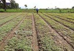 Service agro-services