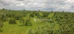 Terrain agricole 25 ha   -Santhie