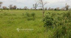 Terrain Agricole 1,96 ha - Ngaye - Tassette
