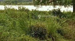 Terrain 3 ha  - Samaya