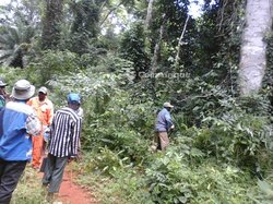 Location Terrain agricole 500 hectares - Mengang Cameroun