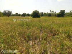 Vente Champs 4 hectares demi - Farakobo