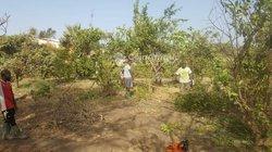 Terrain Agricole  13 ha - Pout