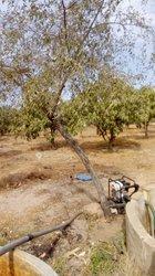 Vente verger clôturé 3,5 ha  - Khodaba