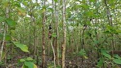 Terrain Agricole 1 ha - Badja