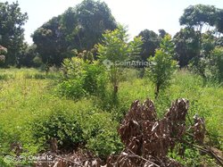 Terrain 15 hectares - Bama