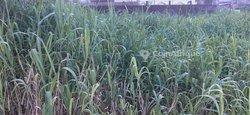 Terrain Agricole 300 m2 - Douala