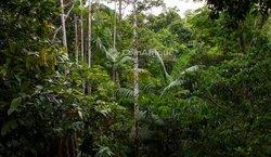 Vente Forêt 5 Hectares Azaguié