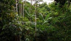 Vente forêt 15 ha - Azaguié