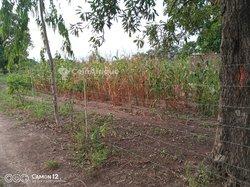 Vente terrains 61 ha - Bobo Ouaga