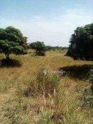 Vente Terrain agricol 10000 m² - Mboro