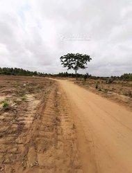 Terrain Agricole 70 ha  - Grand Bassam