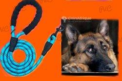 Corde de chien