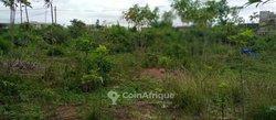 Terrain Agricole 6 ha - Bingerville