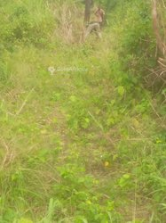 Vente Terrain agricole - Tsevie Yobo