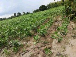Vente Terrain 100 hectares cultivable - Agbélouvé