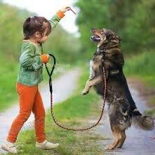 Cordes pour chien