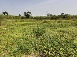 Terrains agricoles 15000 m²  - Mbourokh cisse