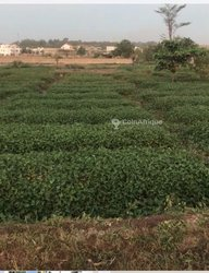 Terrain Agricole - Mangnabougou