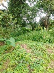Terrain Agricole 3 ha - Ovangoul