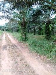 Vente Terrains agricoles 10 000 000m²