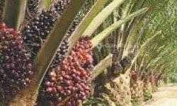 Vente Plantation agricole 1000 hectares