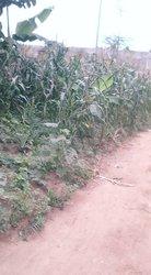 Vente Terrains agricoles