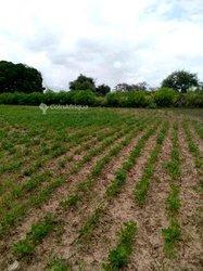 Terrains agricole - Yenne
