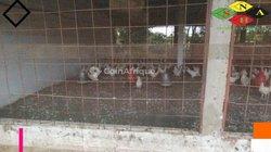 Vente Ferme agricole 12000 m² - Thiès